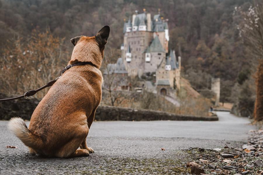 Hund vor Burg Eltz