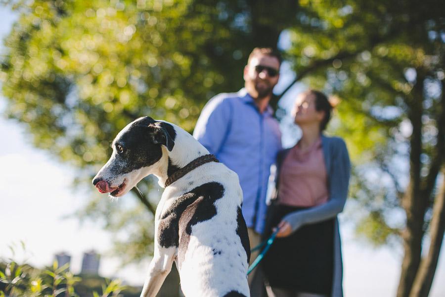 Lustig Hund zeigt Zunge